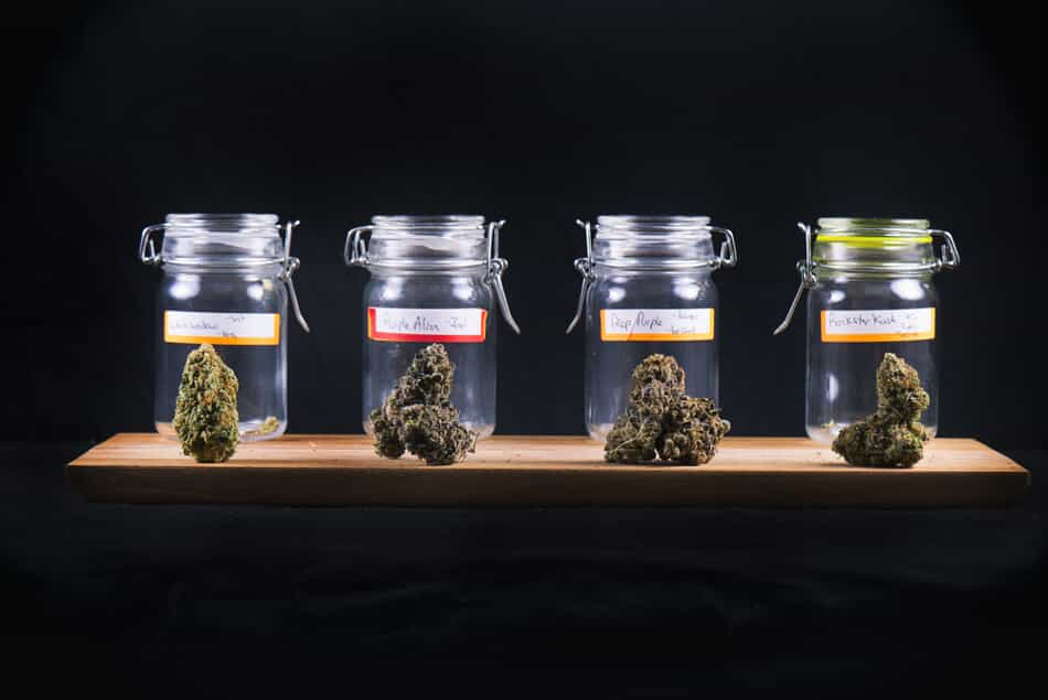 4 Types of Marijuana in Jars